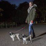 Flexi Vario Ceinture Duo pour Chien Marron Taille S de la marque Flexi image 4 produit