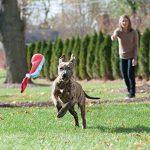 Petstages Sling Chaussette pour Chien Petit Taille S de la marque Petstages image 2 produit