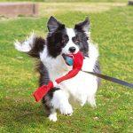 Petstages Sling Chaussette pour Chien Petit Taille S de la marque Petstages image 4 produit