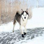 Trixie Walker Active - Bottes de protection pour chien de la marque Trixie image 1 produit