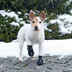 Trixie Walker Active - Bottes de protection pour chien de la marque Trixie image 3 produit
