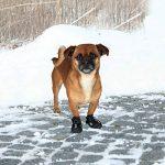 Trixie Walker Active - Bottes de protection pour chien de la marque Trixie image 4 produit